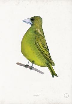 Greenfinch - artist signed print